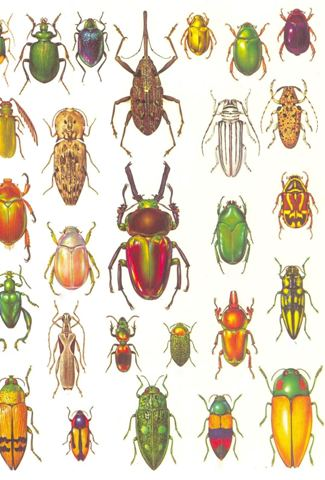 Classification of Insects | Zoology and Entomology articles. IAS ...
